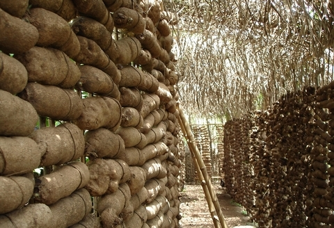 MBAISE NEW YAM FESTIVAL: A Harvest of Thanksgiving – An Expository Analysis by Kennedy Onyegbado –