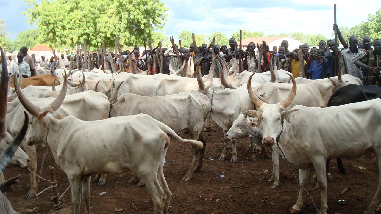 HURIWA Asks Federal Government Of Nigeria To Focus On National Security And Allow Cow Dealers Run Their Private Businesses